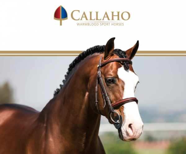 2021 Callaho Online Auction | Winter Edition